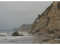 Huge trees that fell down the cliff at Douglas Family Preserve and met their fate on the Mesa Lane steps beach below.