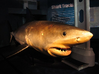 Exhibit about shark tracking at the entrance to the aquarium.