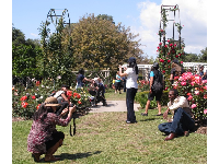 Couples taking photos of each other in the rose garden- happy weekend scene.