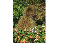 Shaggy dog sculpture made of plants, during the Imaginary Worlds exhibit.