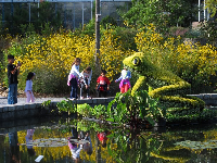 Children playing in front of the flowers by the frog sculpture.