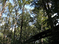 The canopy walk, up in the trees!