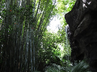 Waterfall and bamboo on Panjani Forest Trail.