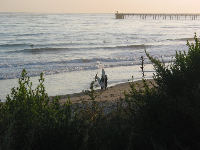 Surfers enjoy the swell near the pier. This surf spot is called Haskells.