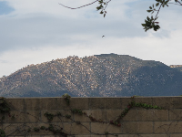 Mountains and bird, as seen from the park.