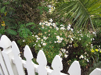 White picket fence and daisies on Main Street, near Morro Bay Blvd.