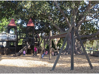The swings and the amazing tree.