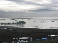 Contest organizers set up their tents along Pillar Point Harbor, on a lovely January morning.