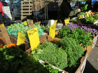 Organic dill at the farmers market.