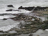 The seals like to lie in this sheltered spot where the rocks curve. They are almost the same color as the rocks.