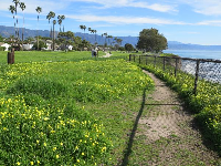 Rows of palm trees and yellow flowers make Shoreline Park look festive.