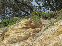 Flowers atop the cliffs, as seen from the beach below Shoreline Park.
