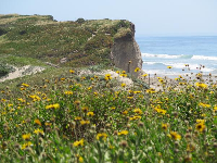 Bluff covered in yellow and purple succulents, and yellow daisies in the foreground.