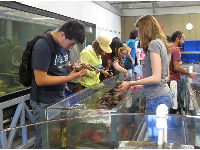 A student looks at a starfish at The Reef touch tank.