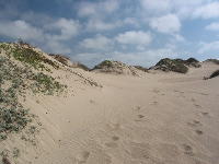 Footsteps in the dunes.