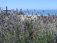 Lavendar, the cross, and the sea.