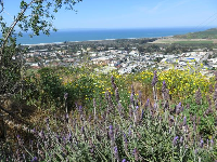 Lavendar and yellow flowers, with strip of sea.
