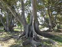 Beautiful tree roots in the park where Kidworld is located.