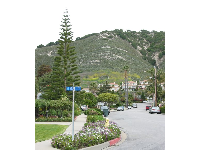 Seacliff Drive: full of flowers, colors, and backed by high hills. Oh, this pine looks like Australia's beach pines!