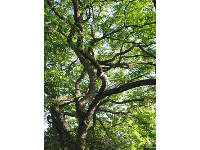 Look up at the canopy of tree branches and pale green leaves.