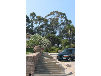 View up the steep street to the eucalyptus-covered hill as you walk along Poli Street.