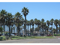 Parking lot has so many palms!