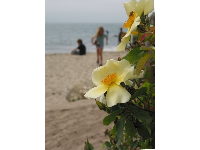 Tropical flower with beach in the background.