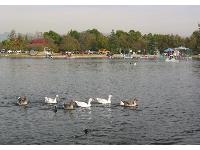Lake balboa park fun maps for Balboa lake fishing