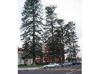 The wonderful Australian pines outside Santa Clara Church.