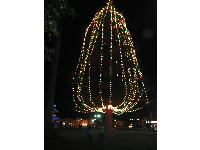 The huge tree lit up in Plaza Park each December.