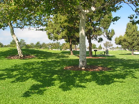 Pretty picnic areas at Seaview Park.