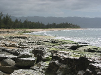 "Glistening rocks at Police Beach, and a strand or ironwood trees in the distance- don't these trees just remind you of ""Lost""?"