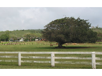A bucolic scene across the street from Turtle Beach.
