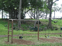 Baby swings, regular swings, and picnic tables under the beautiful old trees. See the old banyan tree up on the hill in the background.