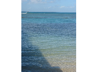 The beautiful color of the water behind Waikiki Aquarium.