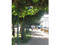 The vine-covered walkway between Hau Tree Beach and the natatorium.