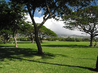 Kapiolani Park stretches out far before your eyes.