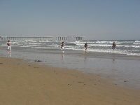 People walking along the shore at Pismo Beach.