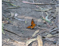 A lone monarch butterfly might land right beside you!
