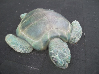 Wonderful sea turtle at the playground.