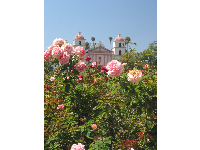 Roses with the mission behind.