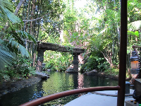 See lush forest and luminous waters on the Jungle Cruise.