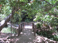 "Footbridge in Ferndell Nature ""Museum."""