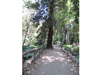 Cute path and redwood.