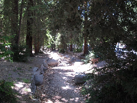 Redwoods lining the dry creek that runs along Ferndell Rd near the playground.