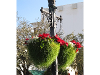Hanging baskets from the lampposts.