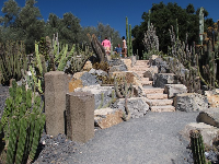 The stone highlights in the cactus garden.