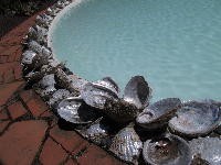 Abalone around a shallow pool.