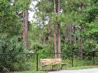 Bench by the pine forest, in the Cambridge neighborhood.