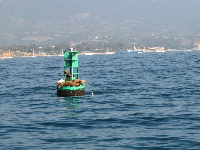 Seals on buoy, as seen from harbor boat trip.